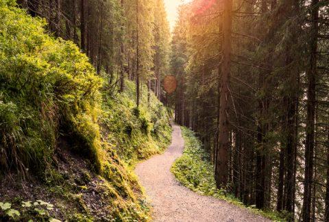 Walk of Wisdom